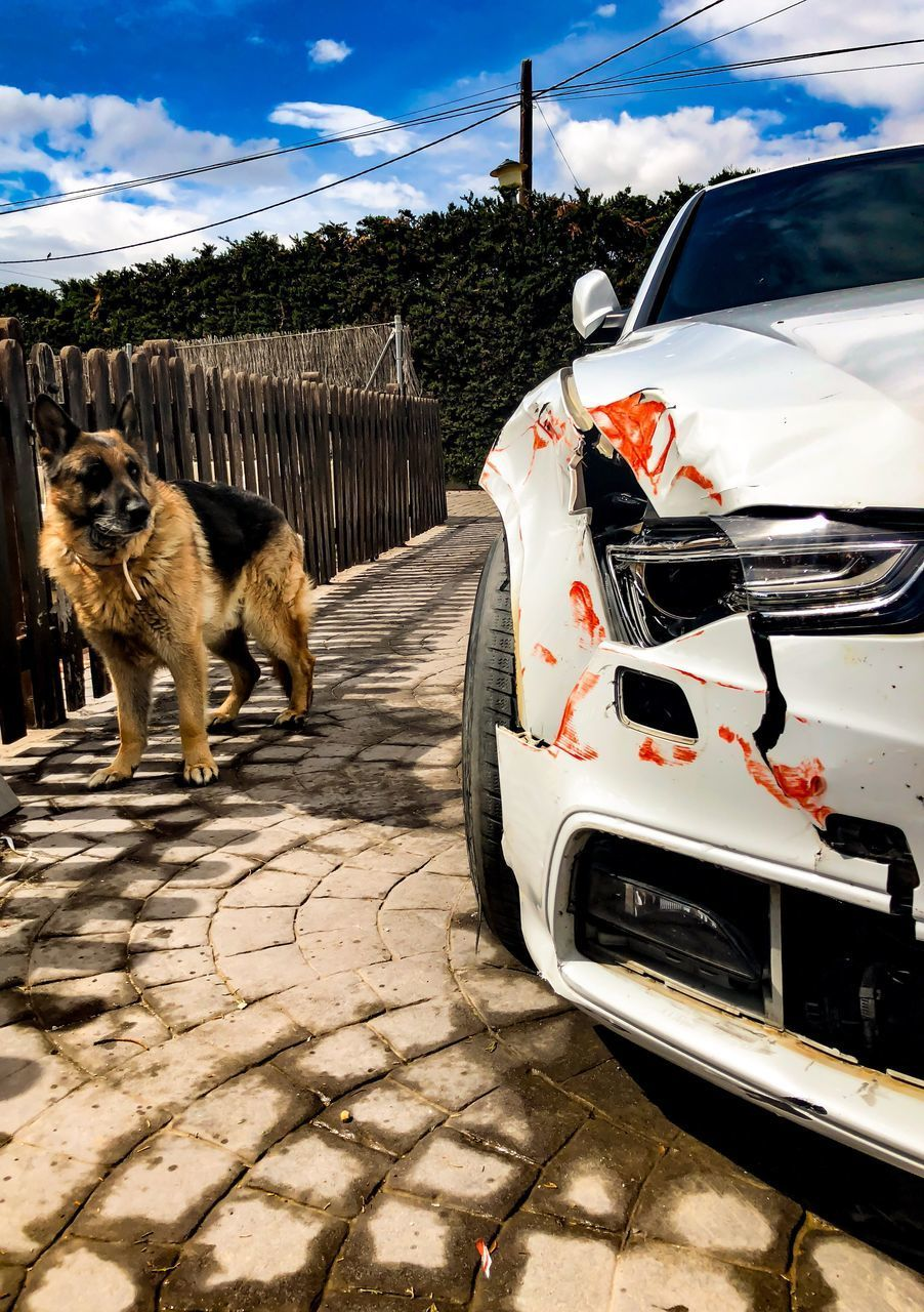 mammal, animal, pets, animal themes, domestic, domestic animals, mode of transportation, car, motor vehicle, one animal, transportation, land vehicle, vertebrate, cat, feline, canine, dog, no people, domestic cat, day, outdoors