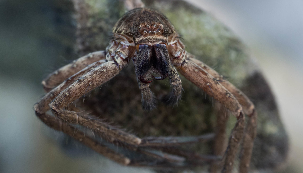 one animal, animal themes, spider, animals in the wild, animal wildlife, close-up, no people, day, portrait, nature, outdoors
