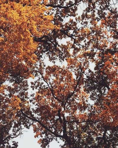 Nature Leave Leaves🌿 Autumn🍁🍁🍁 Autumn Colors Brown Yellow Sky Blue Sky EyeEmNewHere Live For The Story The Great Outdoors - 2017 EyeEm Awards