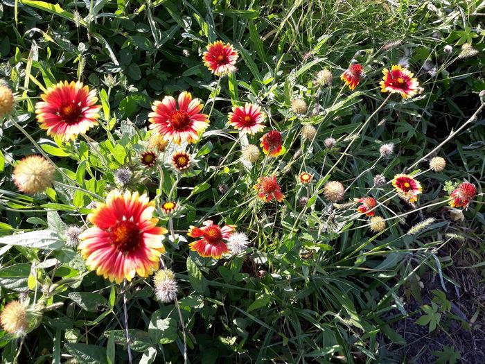 야생화 들꽃 아라배길 휴식 Flower Head Flower Petal Blooming Plant Close-up