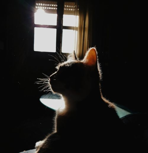playing w/ shadows Samsung Galaxy S8 Phonecamera PhonePhotography Pet Animals Light And Shadow Shadow Light Contrast Perspective Focus On Foreground Sunlight Sun Sunset Window Sillouette Cat Silhouette Window Close-up Looking Through Window Glass - Material Window Frame Posing Personal Perspective