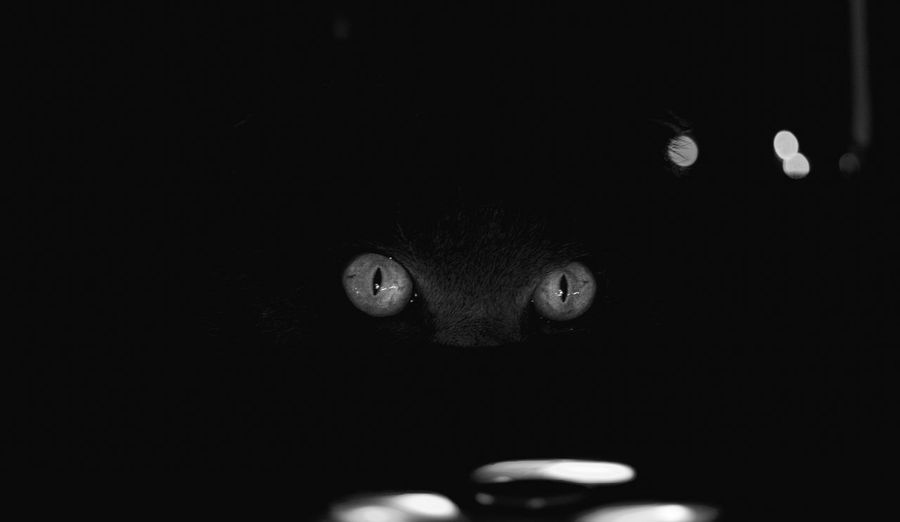 Monochrome version Portrait Looking At Camera Body Part One Person Headshot Close-up Front View Indoors  Dark Eye Pets Night Black Background Cat View View Eyes In Darkness Eyes Light Looking In Dark Domestic Animals Domestic Cat Cat Eyes Monochrome Black And White Light And Shadow