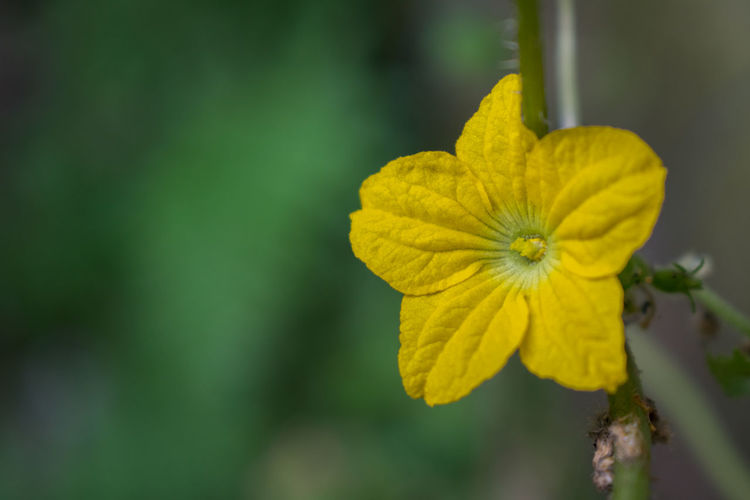 Flower Yellow Nature Macro Yellow Flower Close-up Nature Photography Flower Head Freshness Green Color