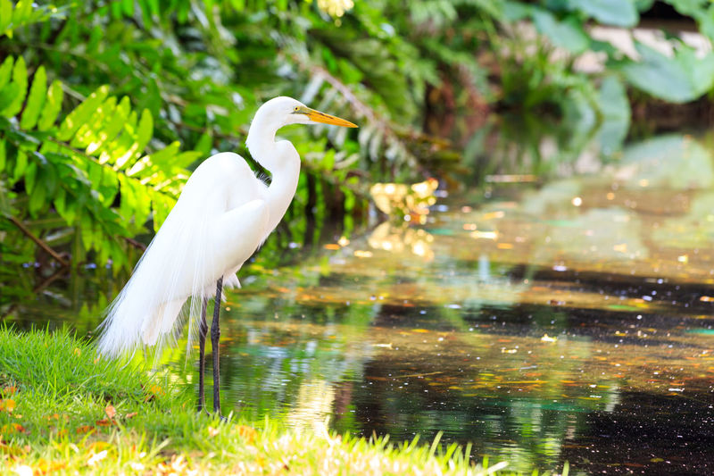 Animal Themes Animal Wildlife Animals In The Wild Beak Beauty In Nature Bird Close-up Crane - Bird Day Egret Fauna Grass Great Egret Heron Lake Nature No People One Animal Outdoors Plant Water Waterfront White Color Wildlife