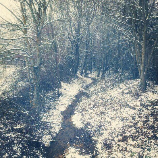 Neve Snow Laquila Bosco ruscello freddo winter