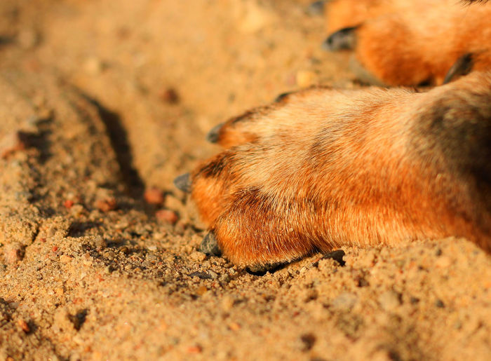 Dackel EyeEm Nature Lover EyeEm Gallery Life Is A Beach Animal Themes Animals In The Wild Beach Close-up Dachshund Dachshund Paw Dackelpaw Dackelpfote Day Domestic Animals Mammal Nature No People One Animal Outdoors Paw Pets Sand
