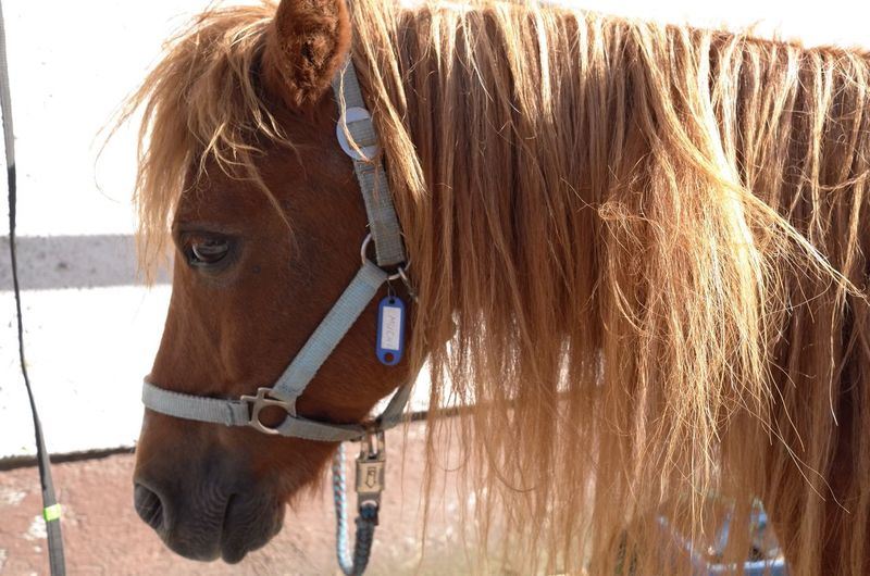 sorry, but your hair needs to get a trim..is this polite enough to say.. Pony Hair Hairstyle Portrait Close-up