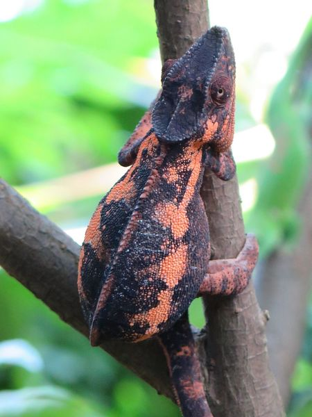 Camaleon Animals Collection Naturelover Beautiful Nature Nature Photography On A Tree