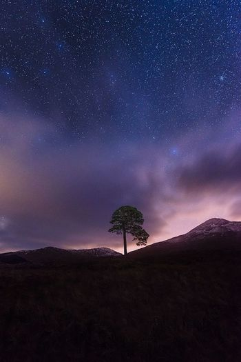 Tree growing on mountain against sky