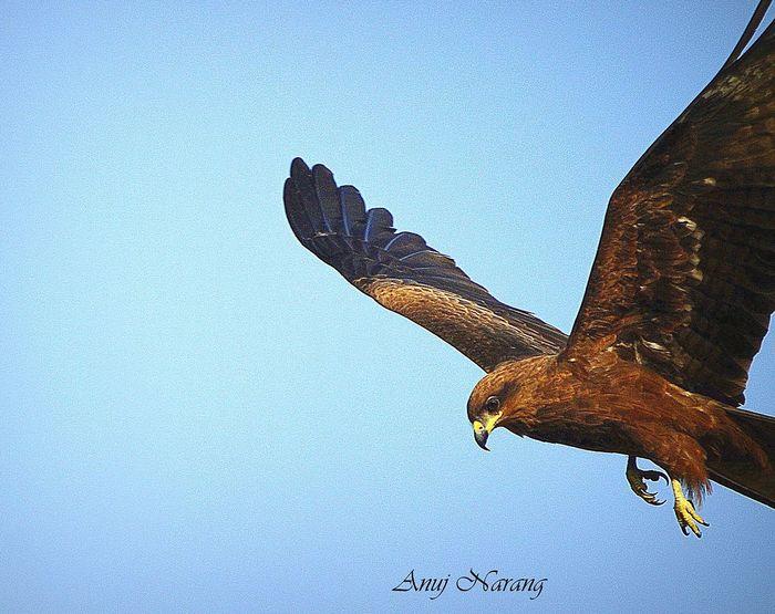 Eagles Beautiful Nature Bird Photography TakeOff Predator Sharp Claws