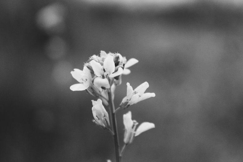 Macro IWish Macro Photography Canon 50mm