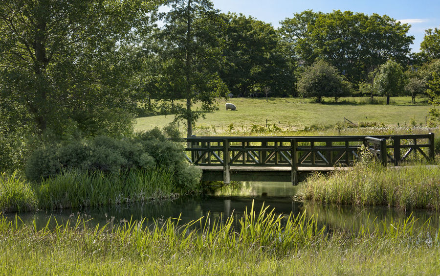 Summertime at WWT London Architecture Beauty In Nature Bridge - Man Made Structure Day Grass Growth Late Summer Colours Nature No People Outdoors Plant Sky Tree Water