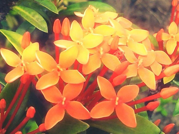 Flowers Orange Holy Daylight Cheerful