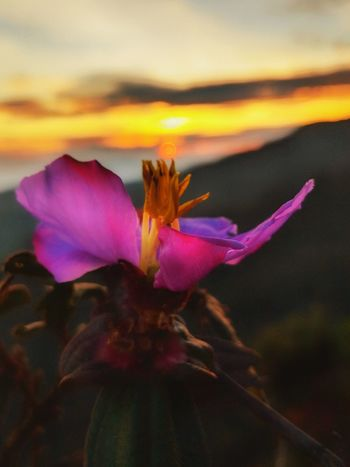 Sunrise EyeEm Selects An Eye For Travel Flower Purple Petal Nature Fragility Beauty In Nature Close-up Freshness