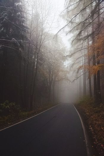 November Spirit. Tree November Rainy Days Autumn Snow Cold First Snow The Way Forward Nature Road Tranquility No People Fog Outdoors Beauty In Nature Bare Tree Tranquil Scene Day Sky