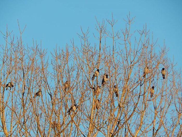 Sildas saulītē 🌞 Heating up in the sun 🌞🌞🌞 Varna Crow Ziema Winter Koks Tree Daba Nature Latvijasdaba Latvija Latvia Fotofanatics_nature_ Nature Putni Birds
