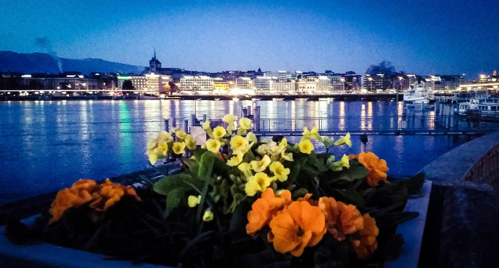 Geneve Morning Afterwork Flowers Goodlight SweetTime Wakeup apres une nuit de travaille en maison dd retraite... Roadtowork Lucky