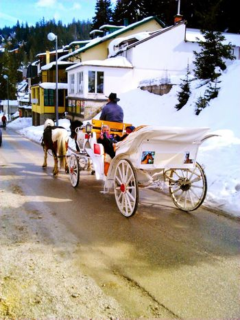 mountain snow horse People People And Places Lovephotography  Nature Beauty Vlasic Bosnia And Herzegovina