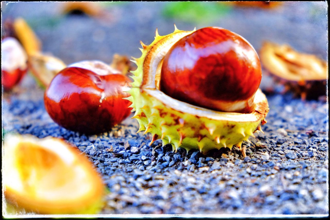 fruit, food and drink, healthy eating, food, freshness, selective focus, close-up, no people, rotten, nut - food, day, outdoors, nature