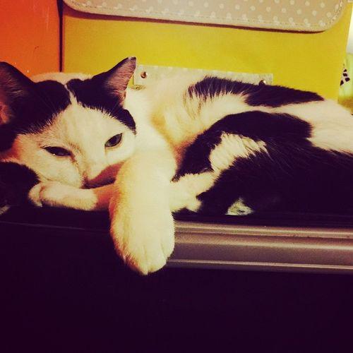 😴😴😴 Cat Cats Pet Petpet Meow Lovecat  Petlover Petal Pets Cat♡ Cat Lovers Lovepet Catsofinstagram Petstagram