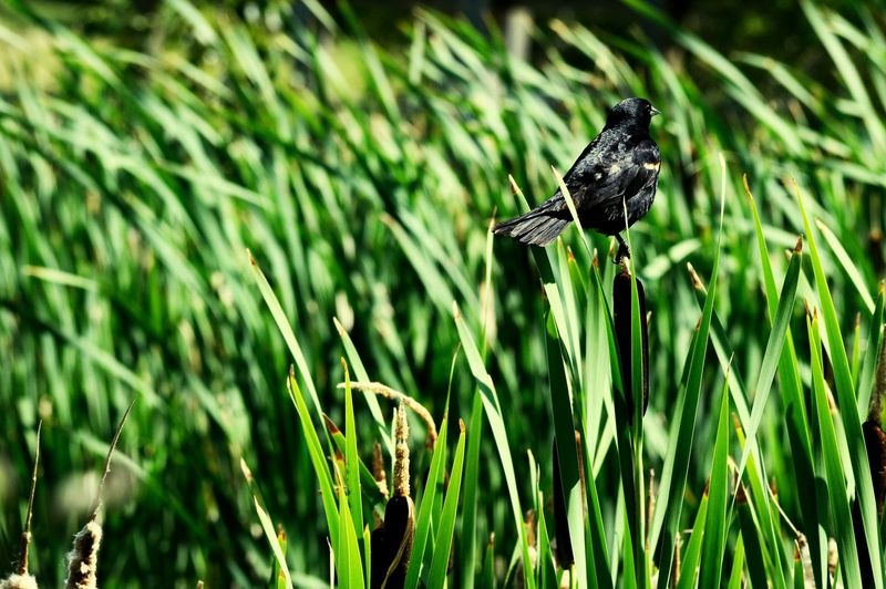 Black Bird Nature Nature_collection Grassland Wetlands Taking Photos Check This Out
