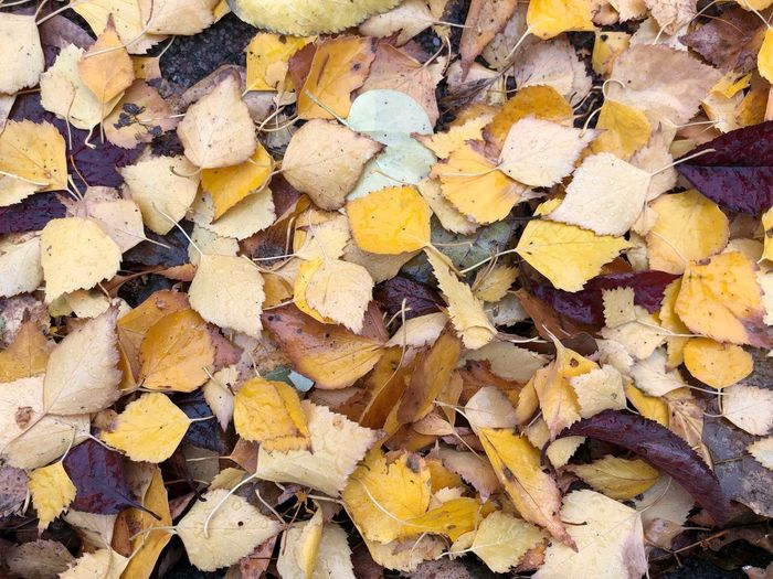 Autumn Leaves Full Frame Backgrounds No People Abundance Day Pattern Yellow Large Group Of Objects Textured  Close-up Nature Outdoors High Angle View Multi Colored Beauty In Nature Directly Above Still Life Natural Pattern Autumn Mood