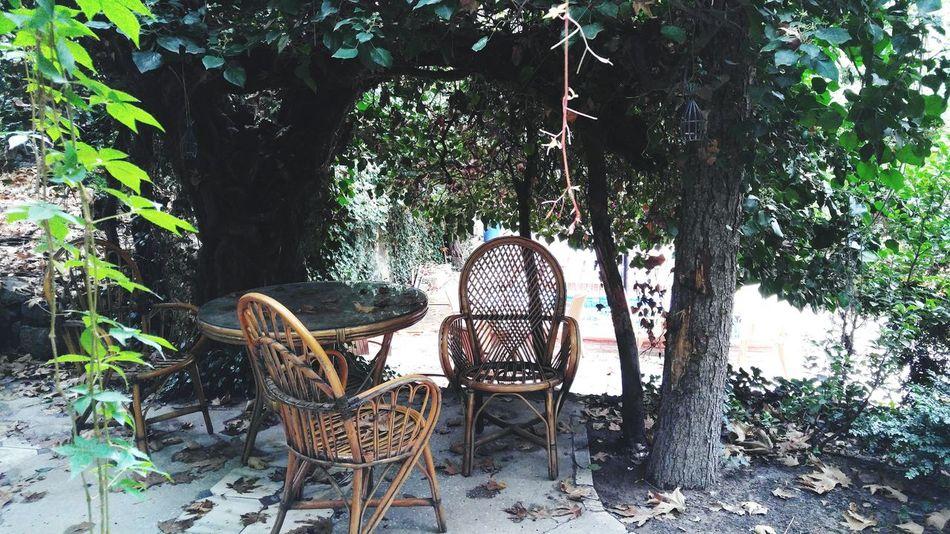 Chair Tree Formal Garden No People