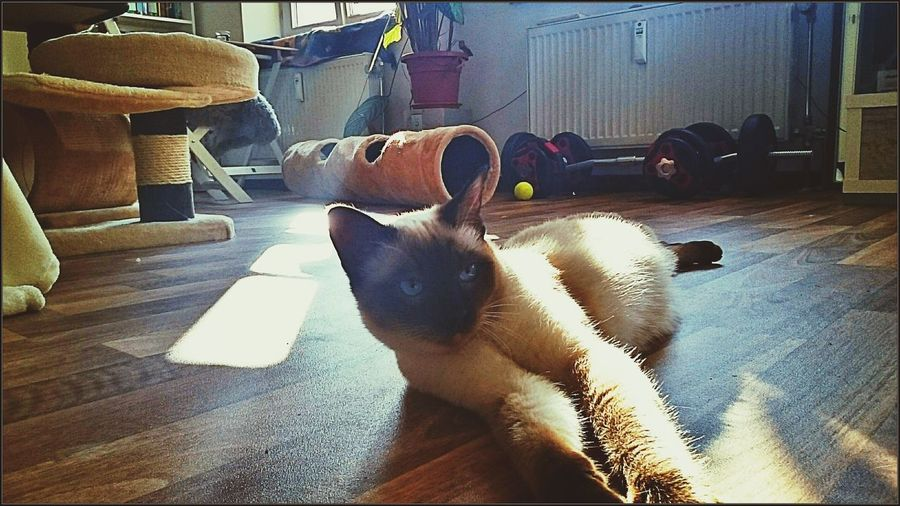 Wilpold Relaxing In The Sun Cat