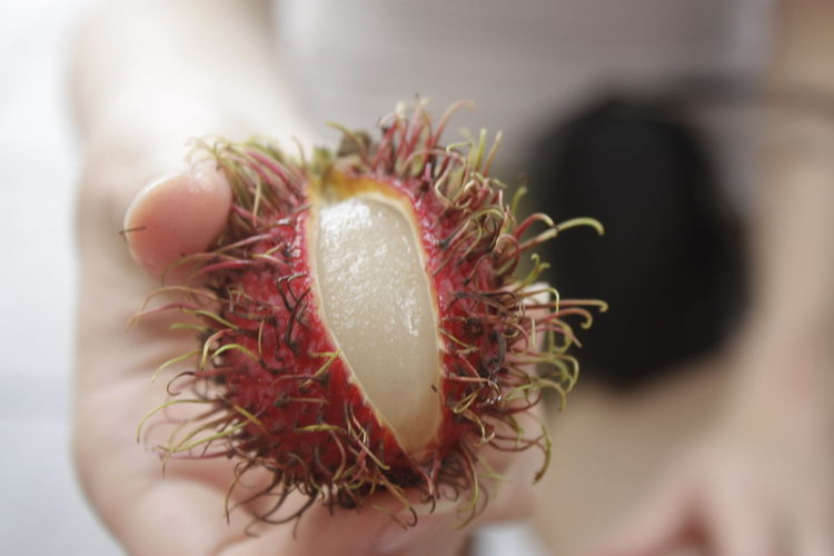 Cropped image of person holding lychee