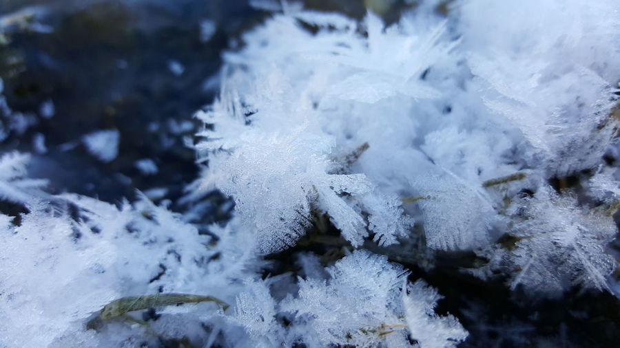 Beauty In Nature Close-up Cold Temperature Day Frost Frozen Ice Ice Crystal Nature No People Outdoors Snow Water Weather White Color Winter