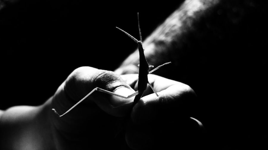Close-up of hand holding grasshopper