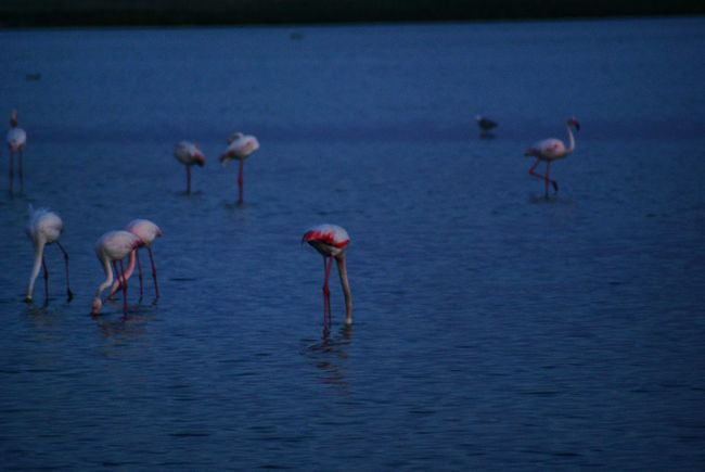 Hanging Out 300mm Happytime Sea Streetphotography Good Times Bird Seacreature Seabird Bird Photography Bird Watching Flamingo Flamingos