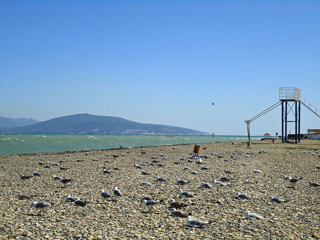 The wind was very strong. Almost no one disturbed the seagulls, the beach was theirs. Beach Beachfront Birds Coastline Gulls Novorossiysk Outdoors Seafront Seagulls Seascape Serene Shore Spacious Summer Sunny Day Tranquil Day Tranquil Days Tranquil Live Windy Day Windy Weather Суджукская коса Deserted Beach