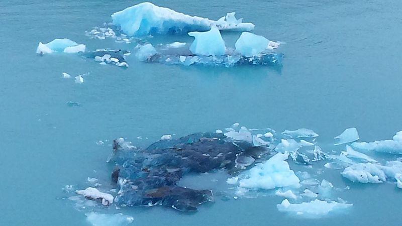 Ice Impressive Perito Moreno. Patagonia. Argentina. Wild Wildlife & Nature Winter Wonder Of Nature Wonderful