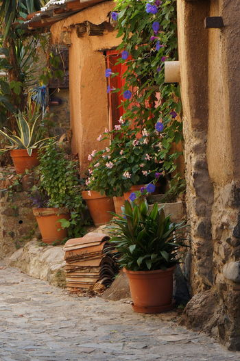 Kakopetria - one of the most charming villages in Cyprus Blooming Flowers Charming Colorful Cyprus Exploring Flower Flower Pot Flowerpot Kakopetria Nature Old Outdoors Plant Potted Plant Rustic Street Street Photography Travel Travel Photography Traveling Village