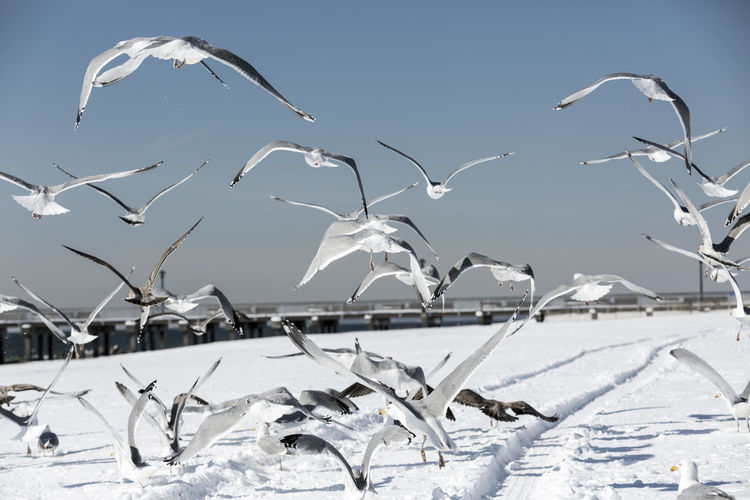 Birds flying above snowcapped field during winter