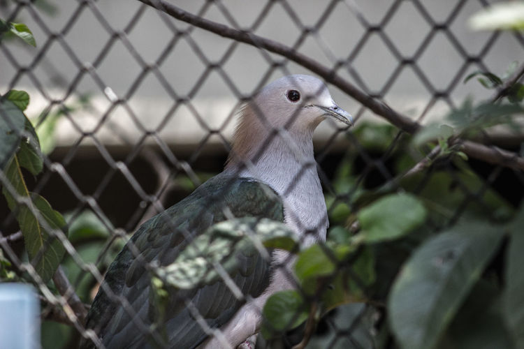 Animals In The Wild Beak Beauty In Nature Chainlink Fence Close-up Day Fence Focus On Foreground Looking Nature One Animal Outdoors Protection Safety Selective Focus Wildlife Zoology