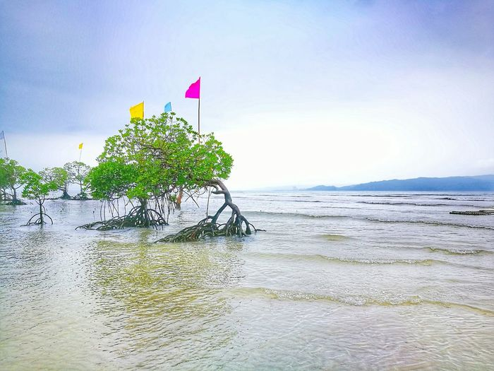 Sea Water Flag No People Beach Tranquility Nature Outdoors Sky Day Huawei P9 Leica Scenics HuaweiP9Photography Beach Photography Philippines Quezon Province Cagbalete Island Cagbalete Cagbaleteisland Beauty In Nature Mangroves Mangrove Plant Mangrove Trees Huawei P9 Plus