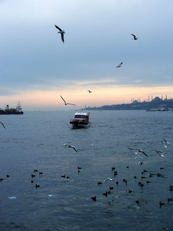 Flying Outdoors Bird Water Sunset Animals In The Wild Animal Wildlife Cloud - Sky No People Nautical Vessel Fly Airplane Animal Themes Nature Day Sky , Istanbul Turkey