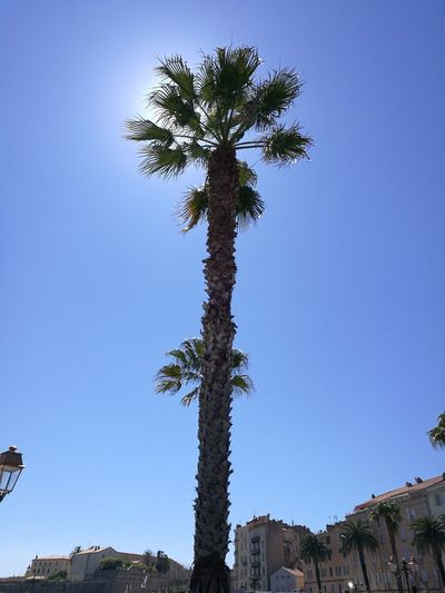 Tree No People Palm Tree Sky Outdoors Nature Day Palmiers Palmiers 🌴👣 Soleil Sun ☀ Soleil☀️ Soleil Et Ombres