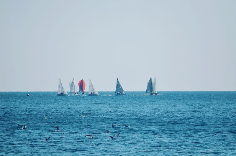 Sailboats sailing in sea against clear sky