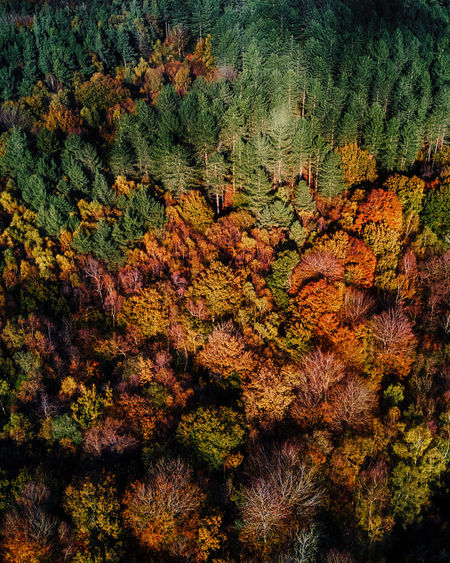 High angle view of tree in forest during autumn