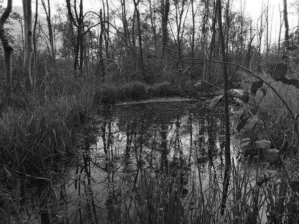 Black and withe :) Forest Water Tranquil Scene Reflection Tree WoodLand Beauty In Nature Waterfront Hanging Out Tripod Photography First Eyeem Photo Blackandwhitephoto MonochromePhotography