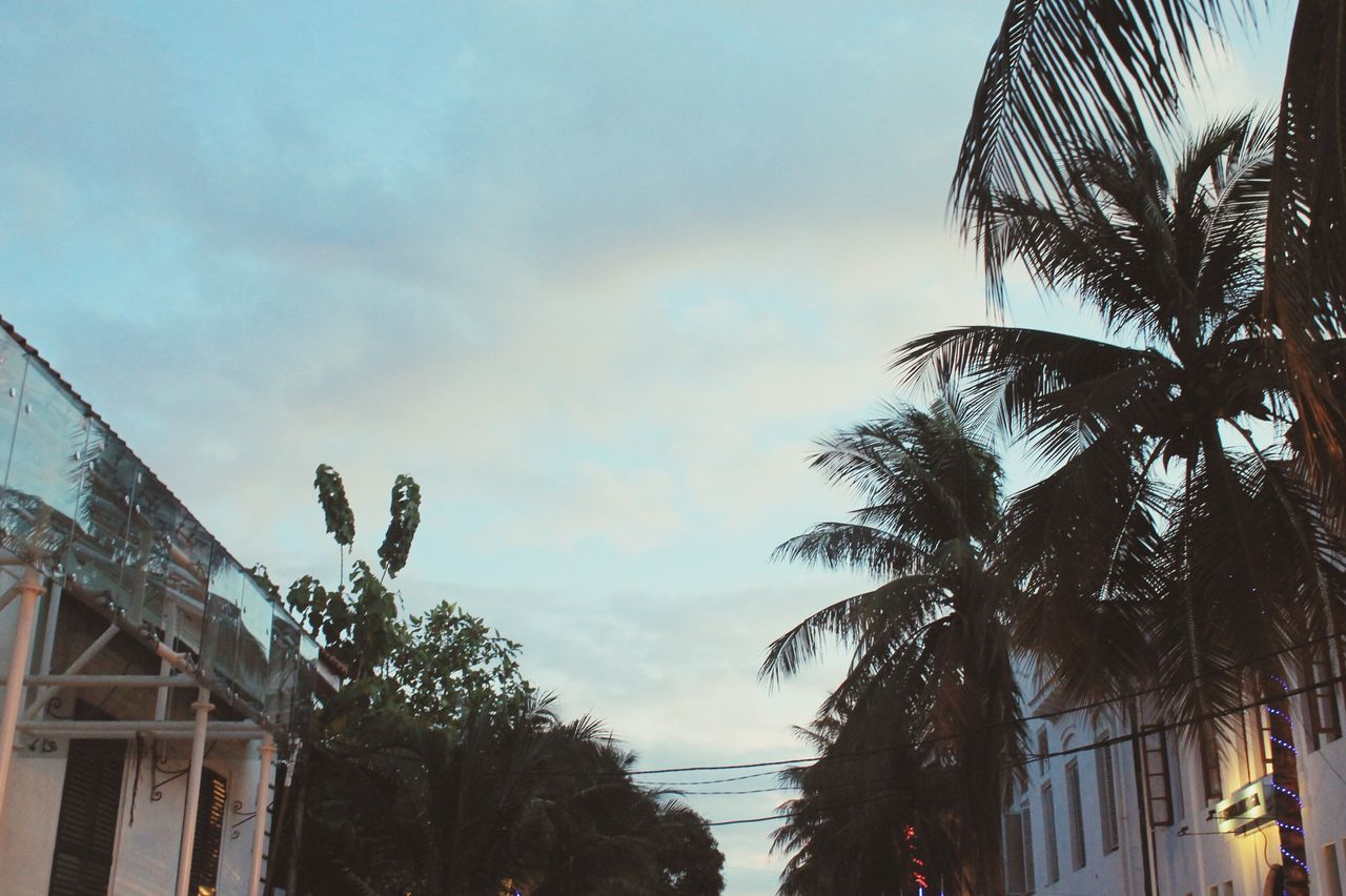 palm tree, tree, sky, low angle view, built structure, outdoors, nature, beauty in nature, cloud - sky, no people, scenics, growth, building exterior, sunset, architecture, day