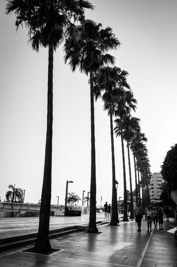 Lifestyles Palm