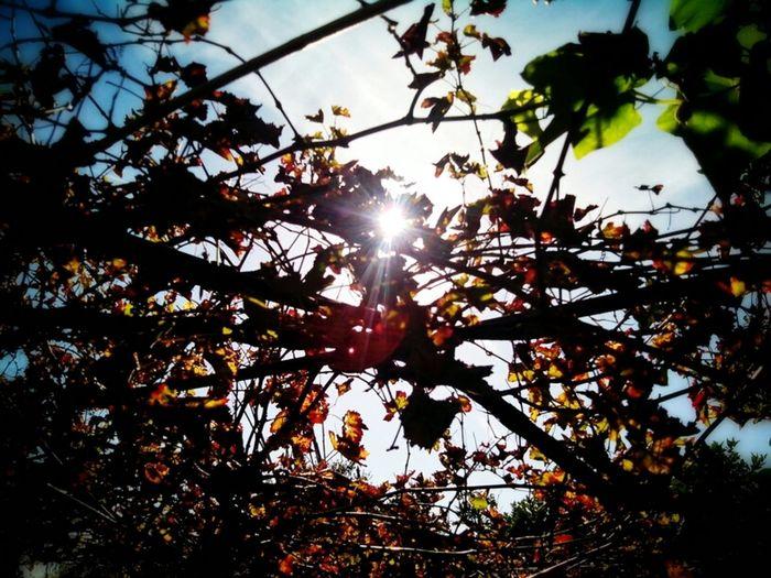 Light Sky Sunny Day Luz