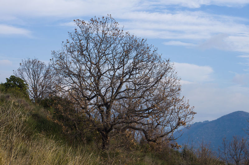 Sky Tree Plant Cloud - Sky Bare Tree Tranquility Beauty In Nature No People Mountain Land Landscape Branch Day Outdoors