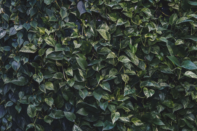 Full frame shot of plants