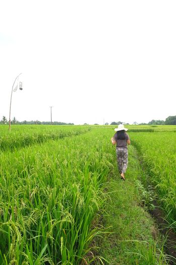 Rice Paddy Rice Field Vilage Balinese Life Balinesegirl Nature Working Irrigation Equipment Cereal Plant Farmer Rural Scene Farm Worker Occupation Agriculture Women Field EyeEmNewHere A New Beginning