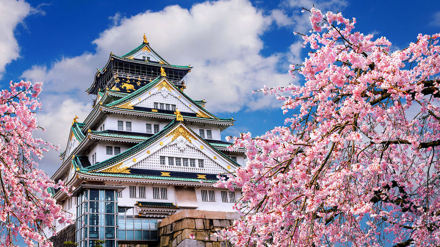 Cherry blossoms and castle in Osaka, Japan. Tree Built Structure Architecture Plant Building Exterior Flowering Plant Flower Nature Blossom Growth Cherry Blossom Building Springtime Branch Sky Day Fragility Freshness No People Beauty In Nature Cherry Tree Outdoors